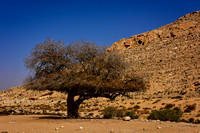 Israel, The Negev