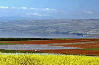 Galilee fields & Mt. Hermon